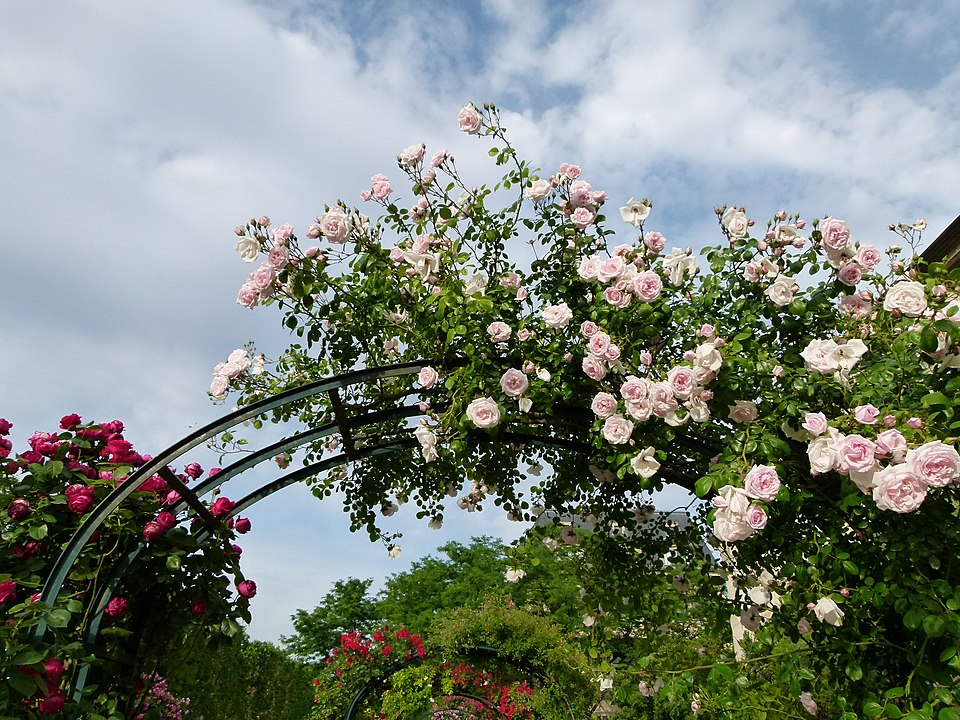places to see roses in paris